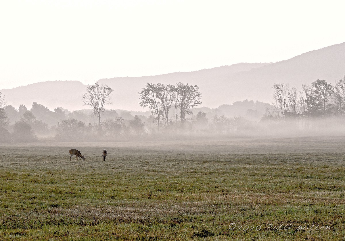 Two deer graze in a field with misty trees and a hill behind them