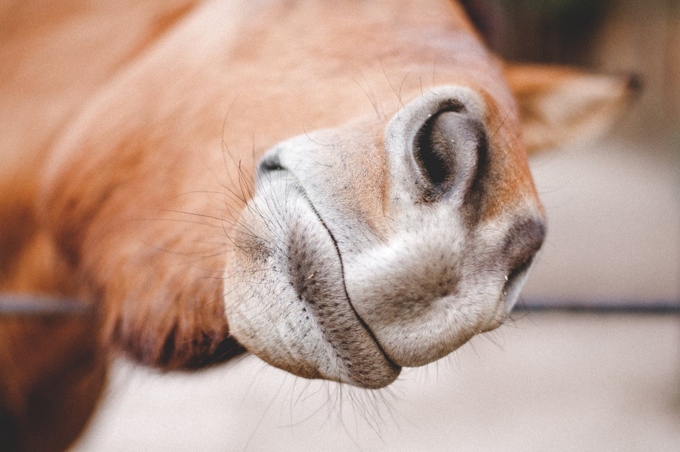 a horse extending his nose to the person taking the picture
