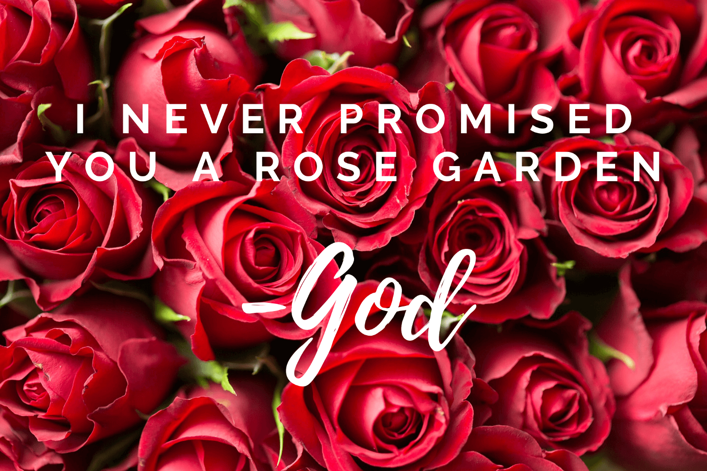 Red rose background. Text: I never promised you a rose garden. -God