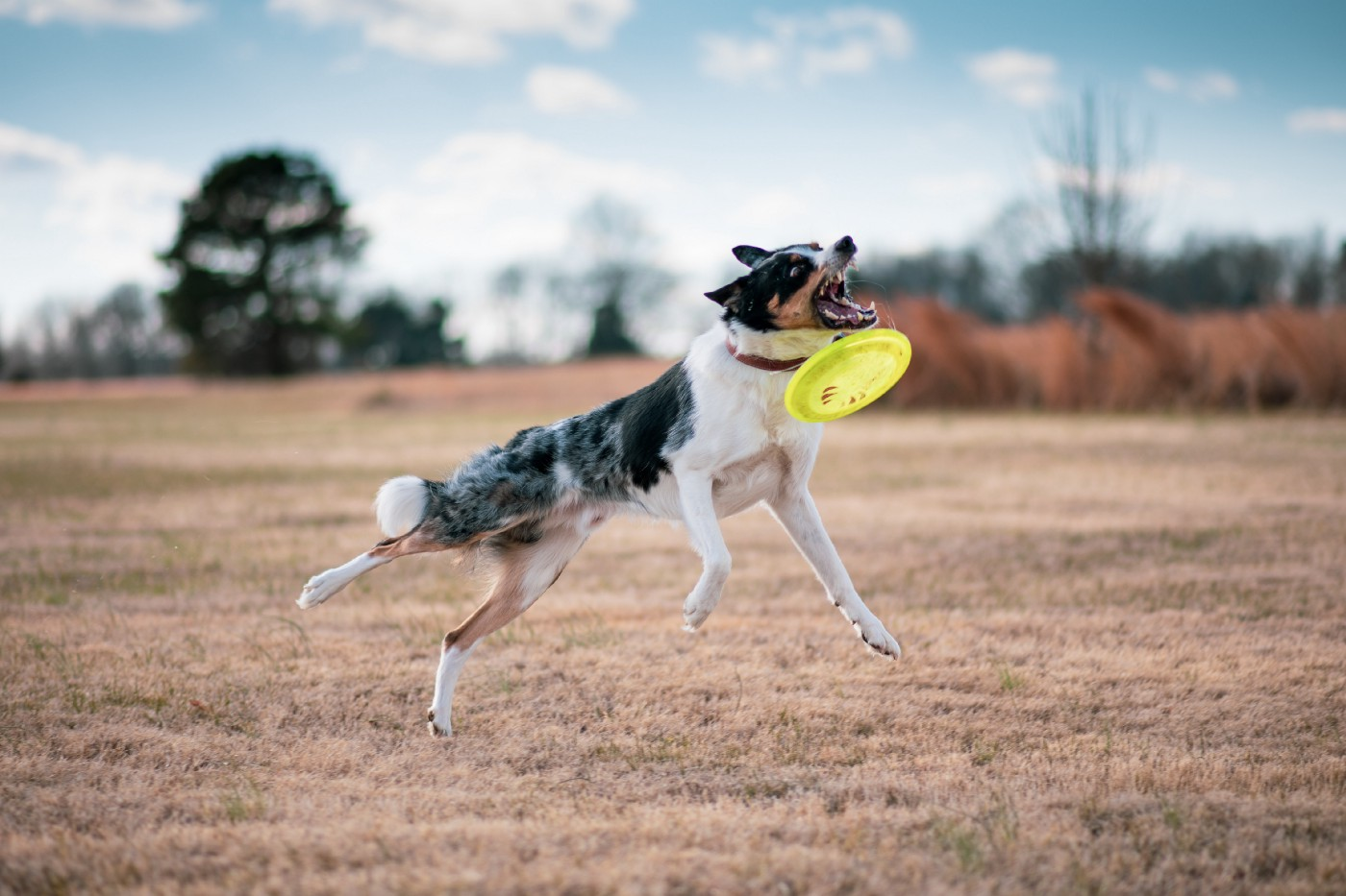 Dog trying—and failing—to catch a ball