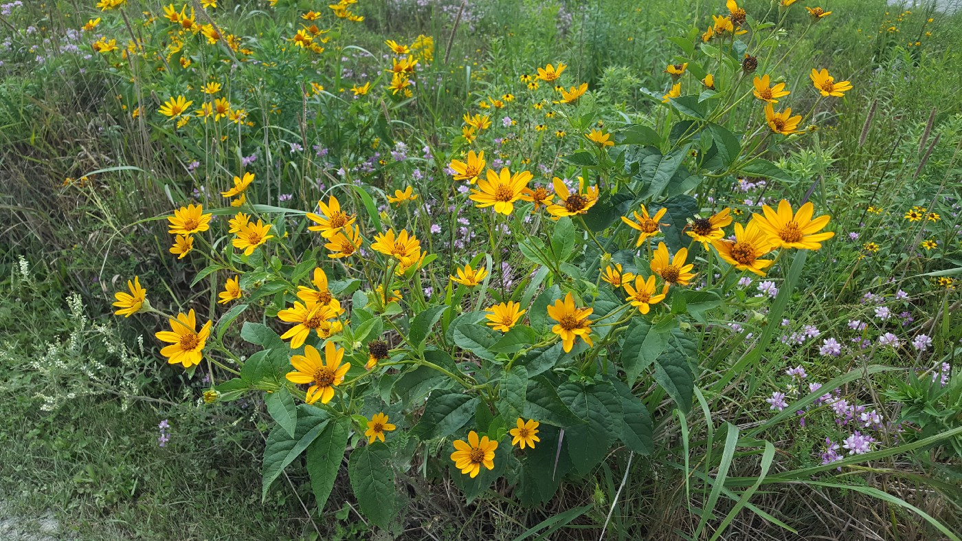 """yellow daisies from the Shanksville field where Flight 93 crashed. """"A common field one day, a field of honor forever."""""""