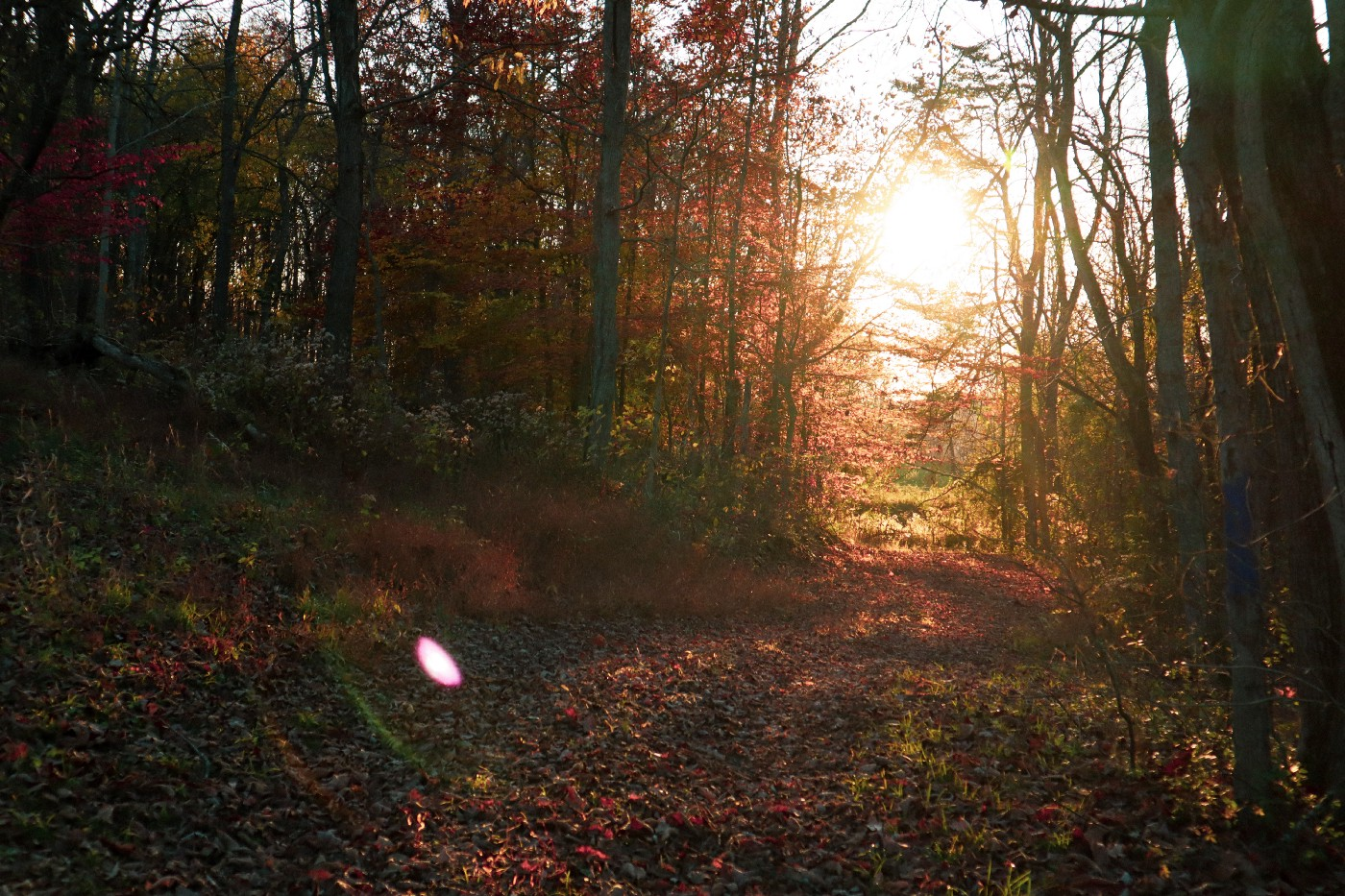 View of a forest path with sunlight beaming down