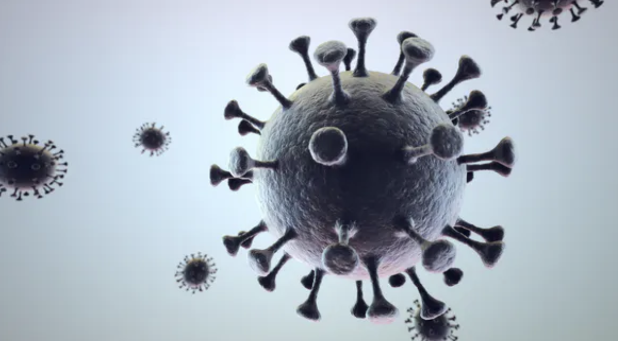 image of a virus