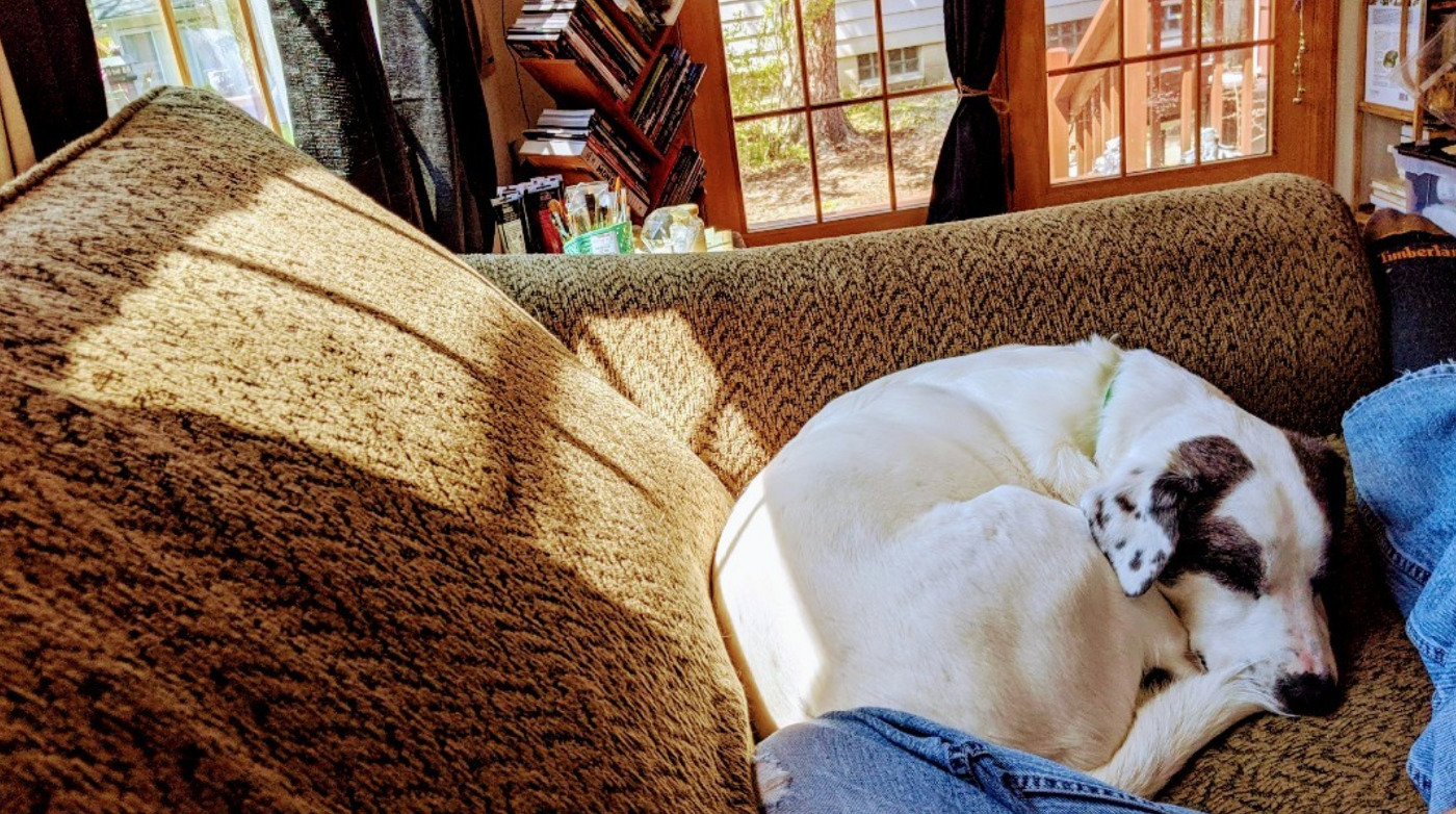 napping with my dog on the couch with warm sunshine splashing over us