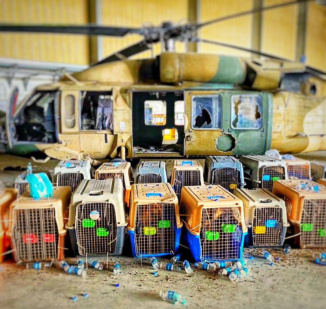 Photo of several service dogs left behind in crates in Afghanistan. A military helicopter in the background.