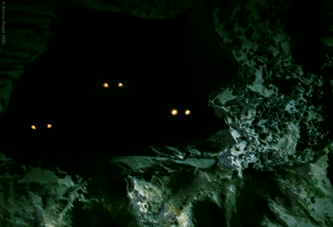 Three pairs of golden eyes watch from a dark cave.