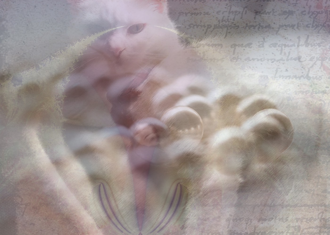 Composite image of a white cat, string of beads, a page of handwritten script, and a fractal design that resembles female genitalia.