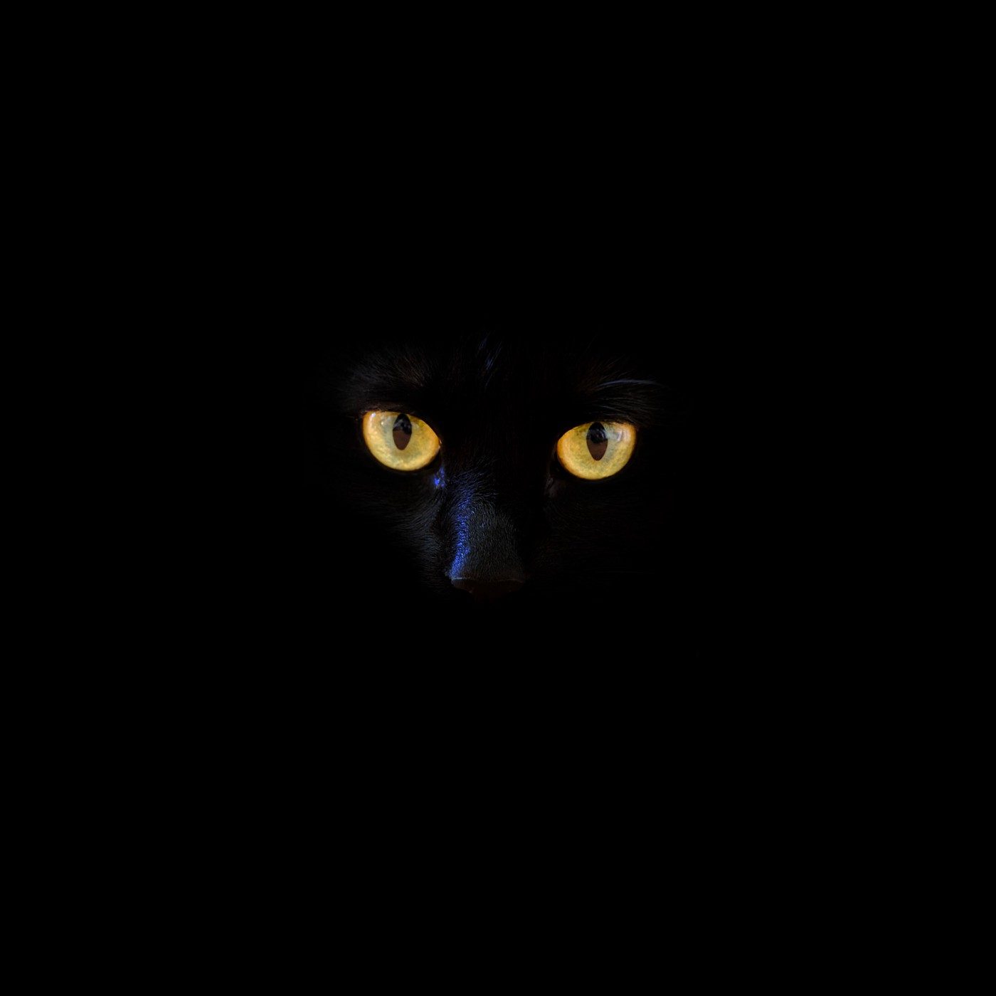 Black cat with yellow eyes on black background