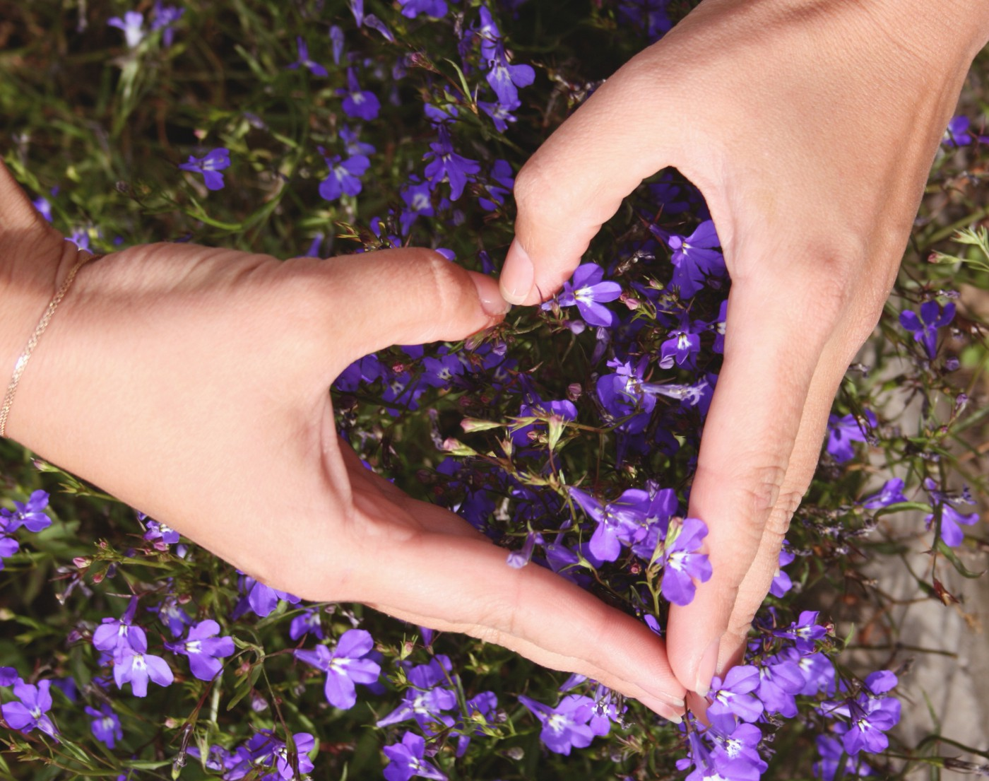 Closeup of two hands making a heart shape over a violet plant.