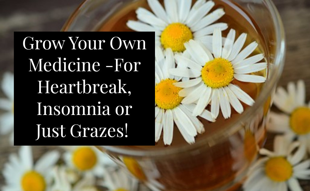 Chamomile herbal infusion for head ache relief
