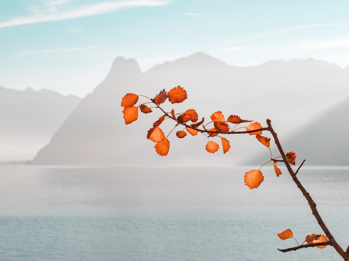 Branch with orange leaves in front of lake