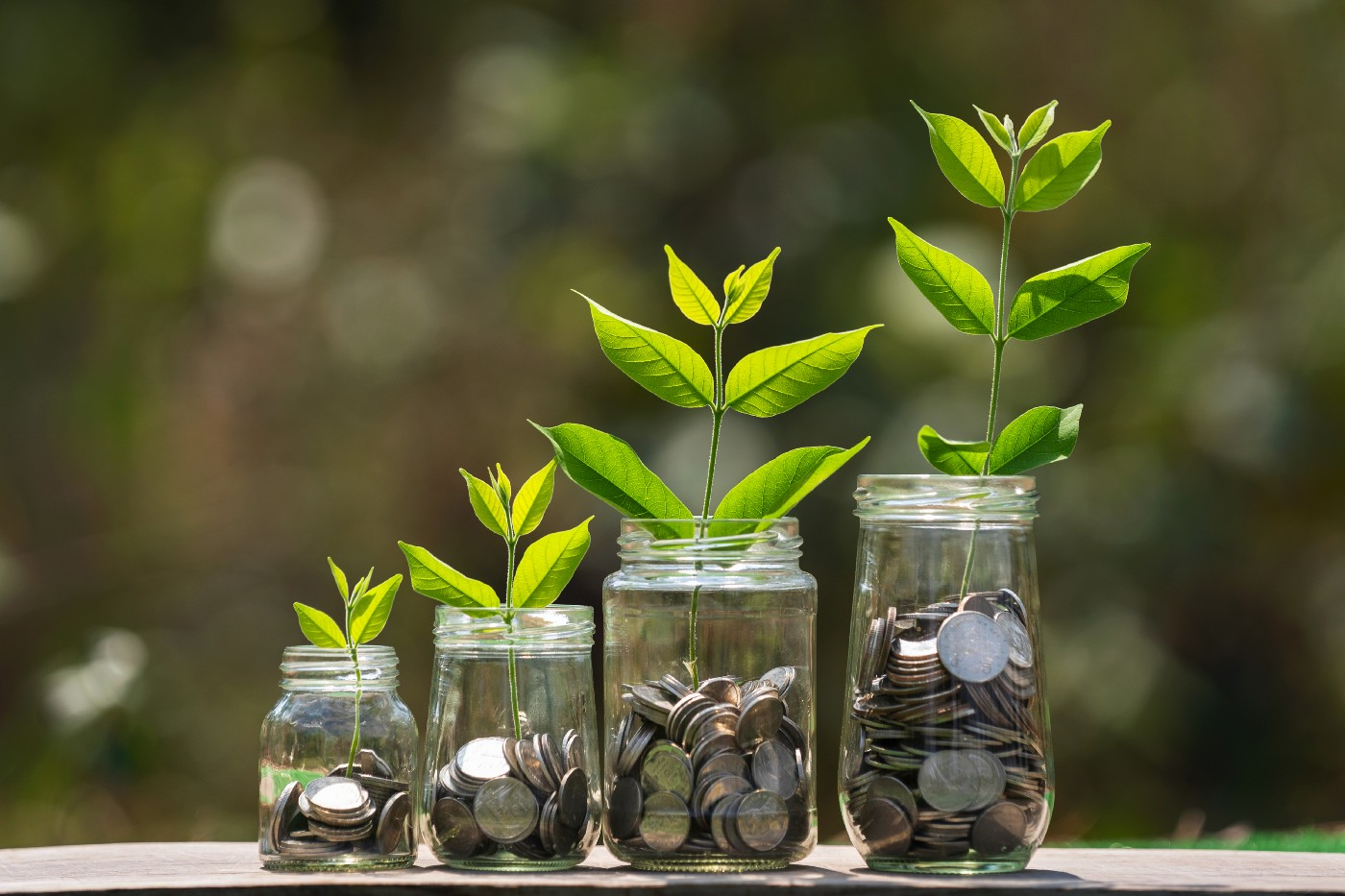 Conceptual photo of jars with coins with seedlings growing out of them.