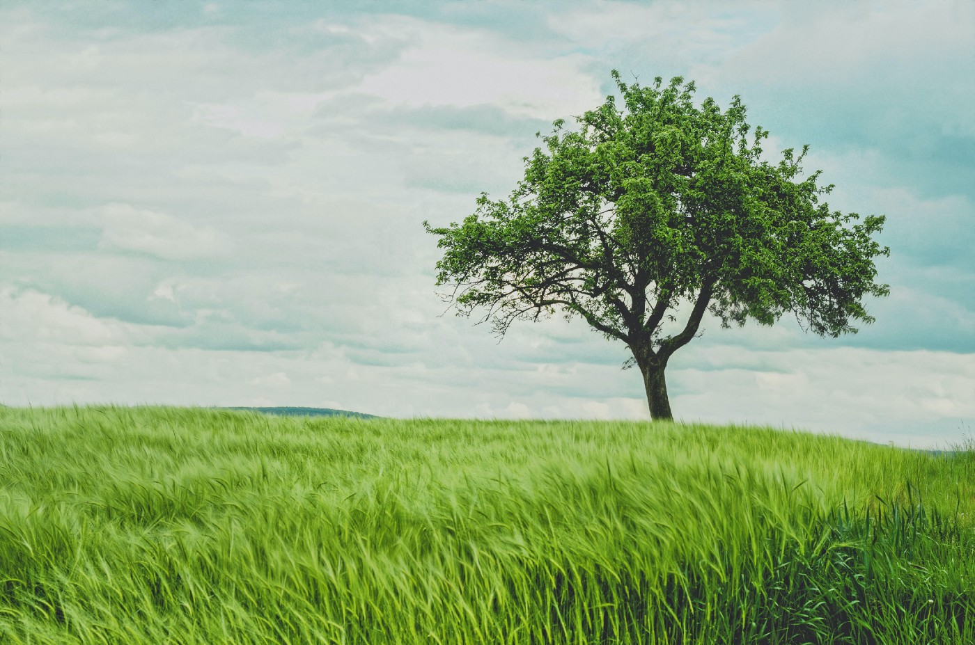 Green pasture with a tree and a clouded sky
