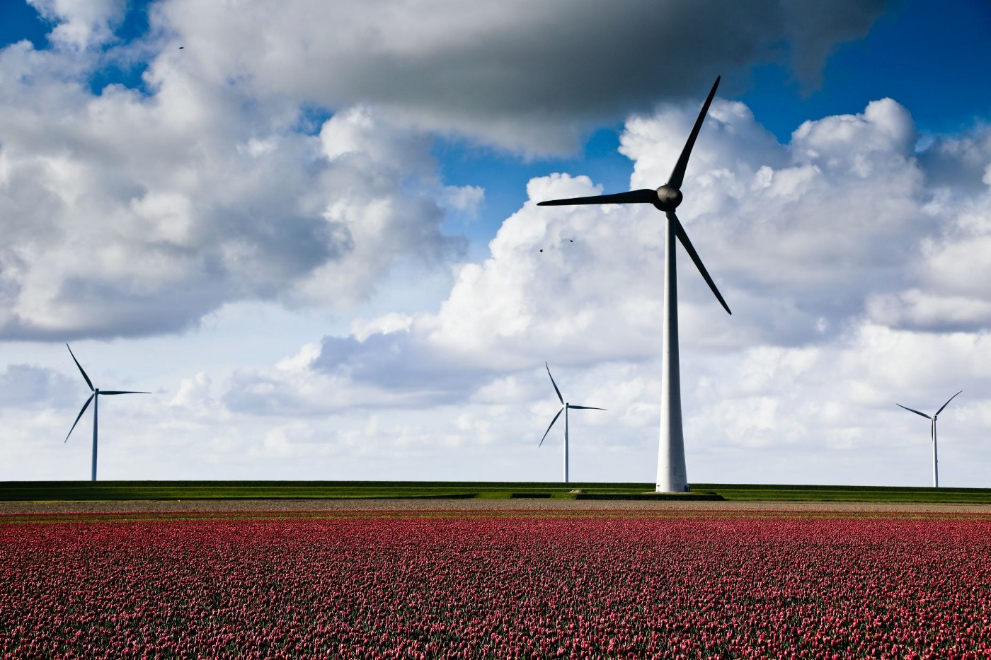 Photo of windmills over field of flowers