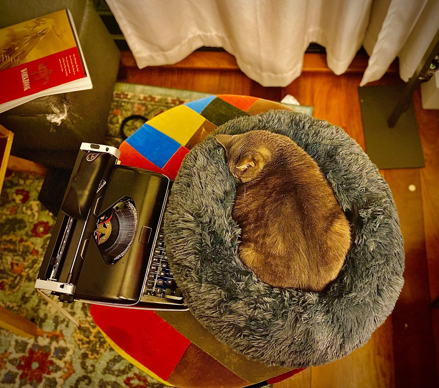 POV camera from above a colorful patchwork ottoman, on which we see a black typewriter on the left and a napping grey cat on the right. Below, a portion of a blue rug on the left and bamboo hardwood floor on the right.