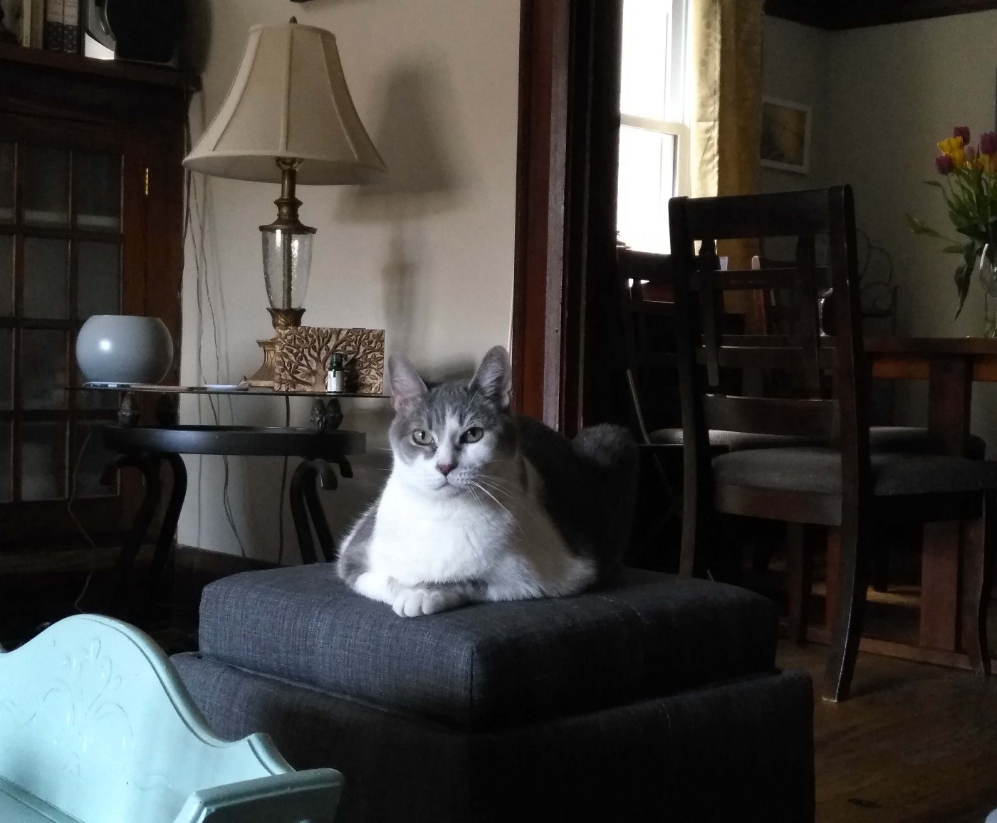 A grey and white cat named isis sits on a grey ottoman with a lamp behind her and a vase of tulip just at the edge of the frame on the right.