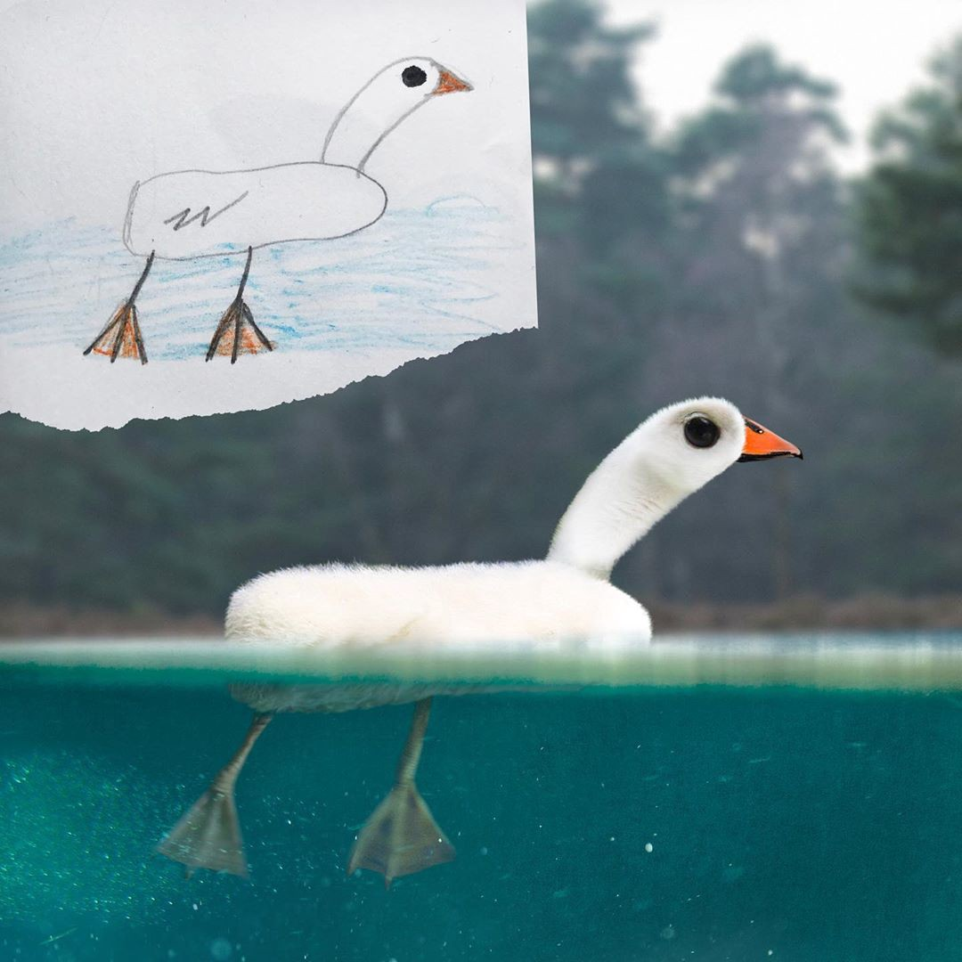 The top left corner shows a child's drawing of a duck floating in water. The main pic is a realistic version of the drawing.
