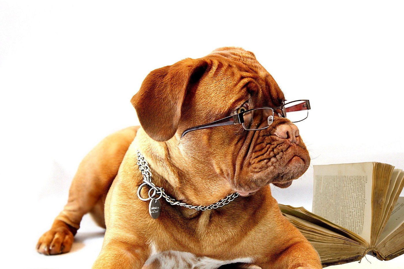 Dog wearing reading glasses with a book