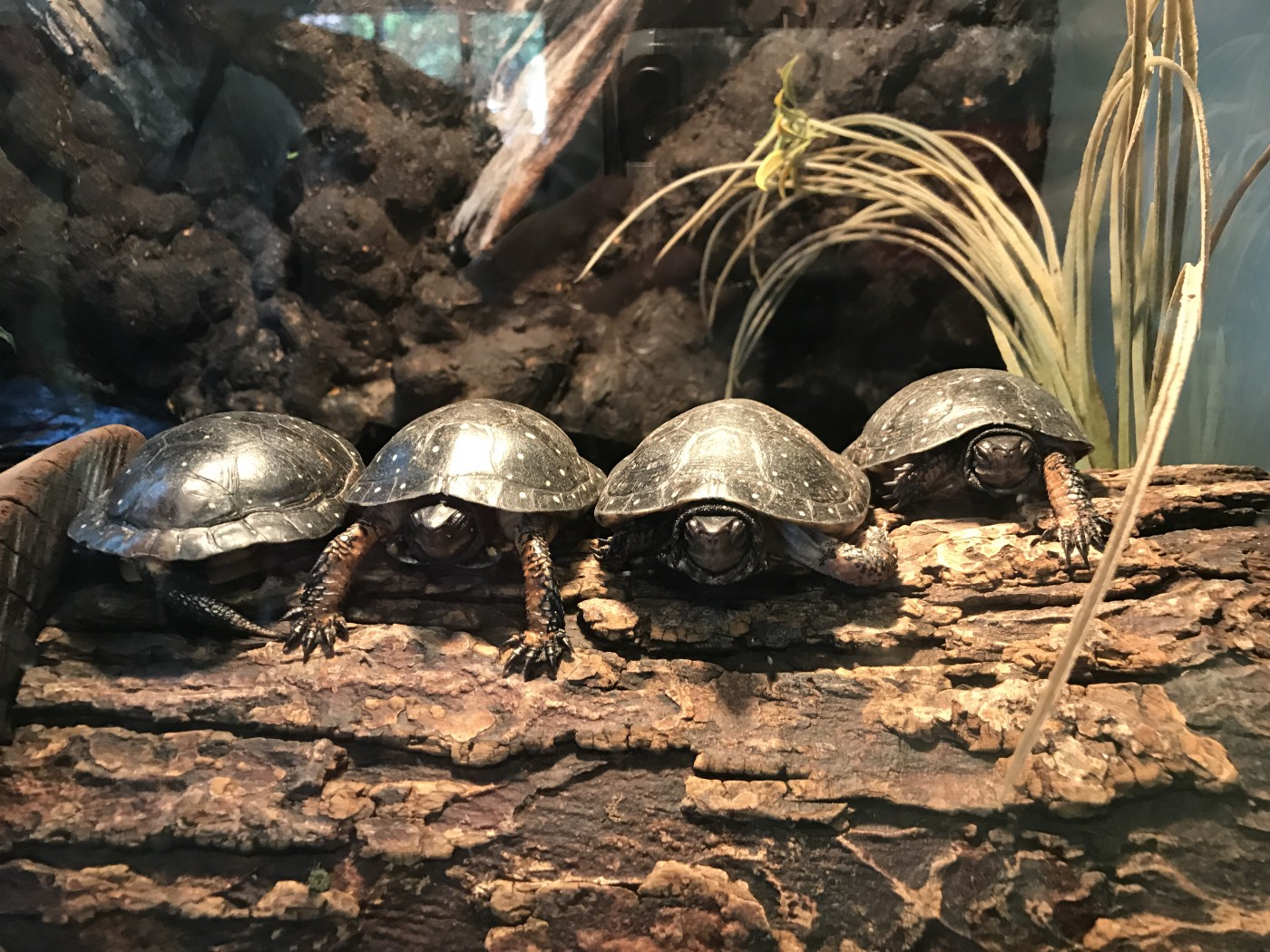 These little guys greet visitors to Bergen County Zoo located at Van Saun County Park in northern New Jersey. Photo by Francesca Di Meglio