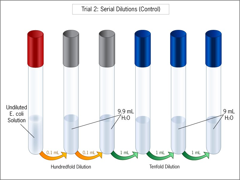 Diagram shows 7 test tubes used to perform a serial dilution. The first two dilutions are hundredfold, the rest tenfold.