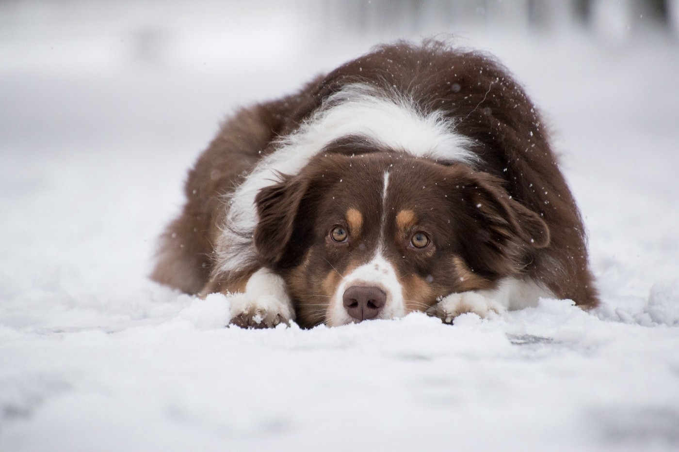 Cute dog lying in the snow