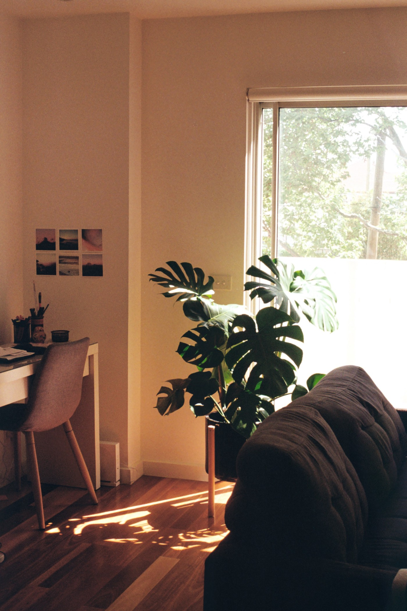 Australian home with a desk and plant