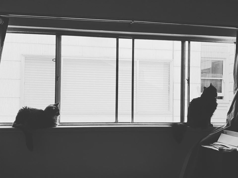 two cats sit on opposite ends of a window.