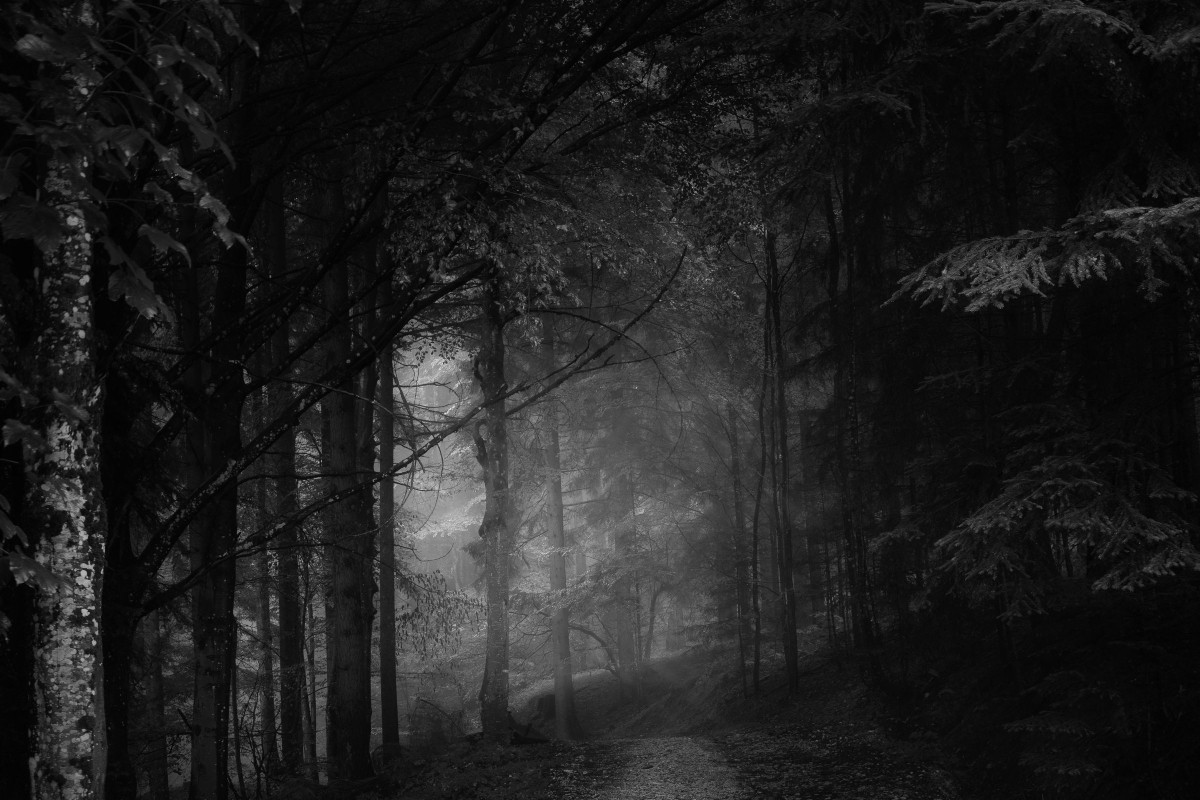 A scary, dark forest.