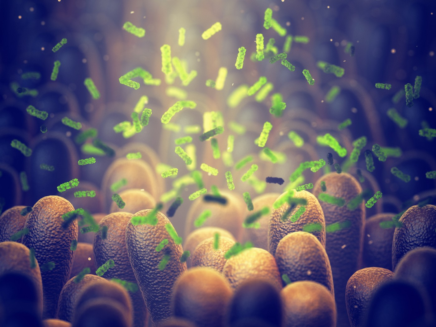 The gut microbiota impact digestion and interface with the host immune system.