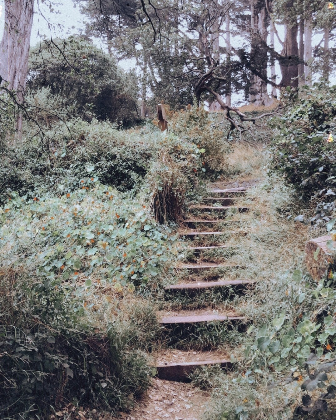 Steps along a pathway