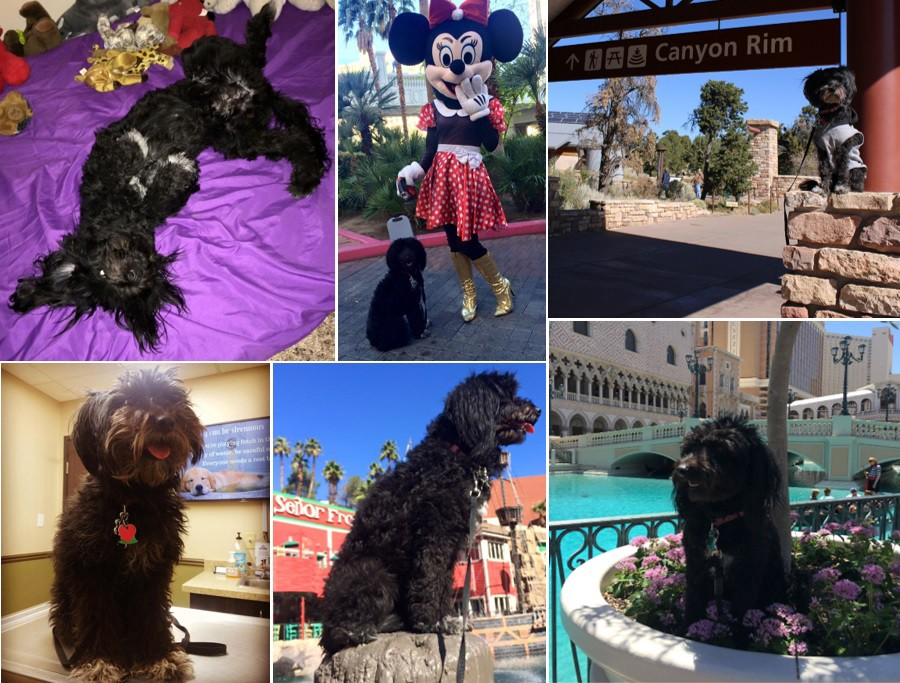 A collage of me, dog, posing in many different places where I travel.