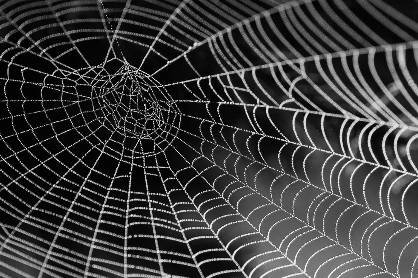 Best Python Libraries to Perform Web Scraping