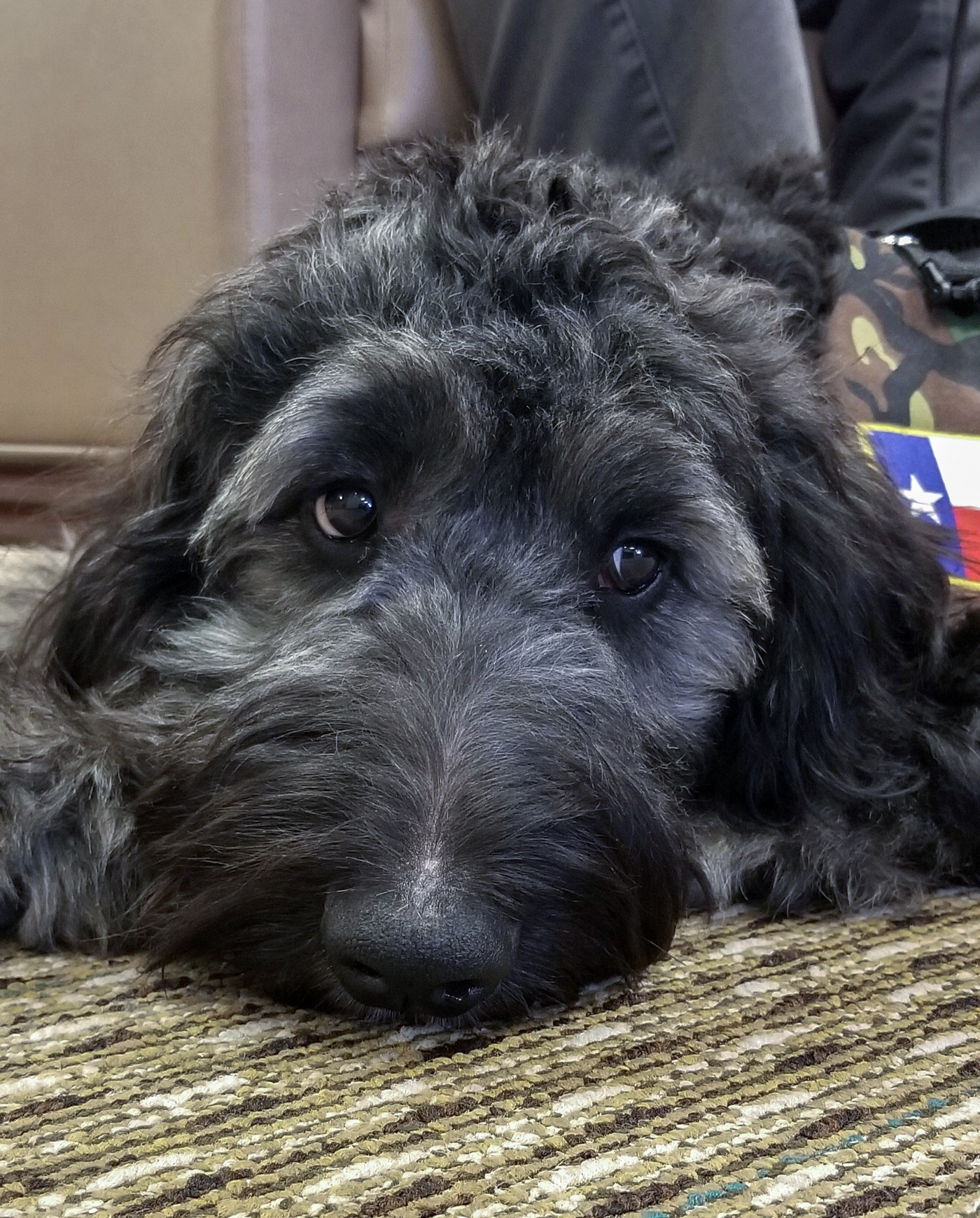 Sully the Therapy Dog Coming Soon to the Texas State Veterans Home