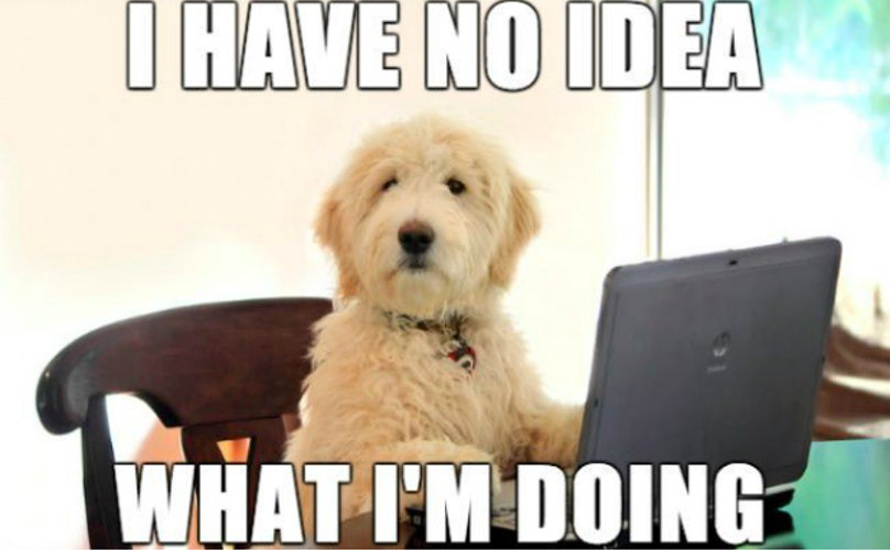 Meme - I have no idea What I am doing—The 9 Dog Memes Every Respectable Dog Person Should Know (2015)