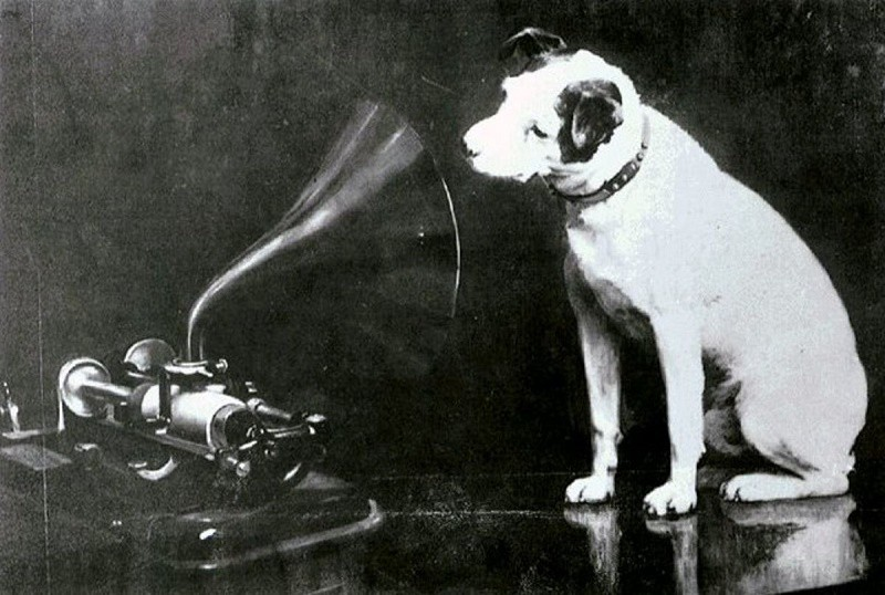 Dog looking at and listening to a phonograph. Francis Barraud's 1898 painting of Nipper looking into an Edison Bell cylinder phonograph.