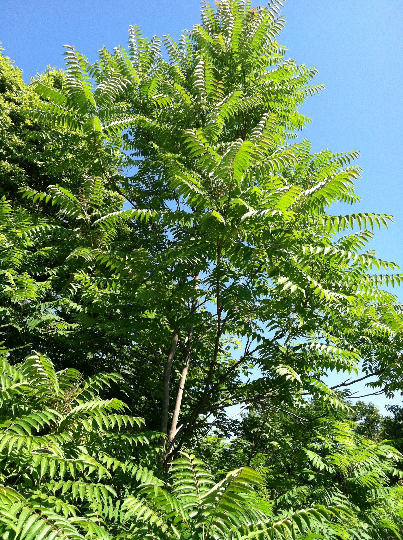 a tree with leafy green branches stretches toward a blue sky