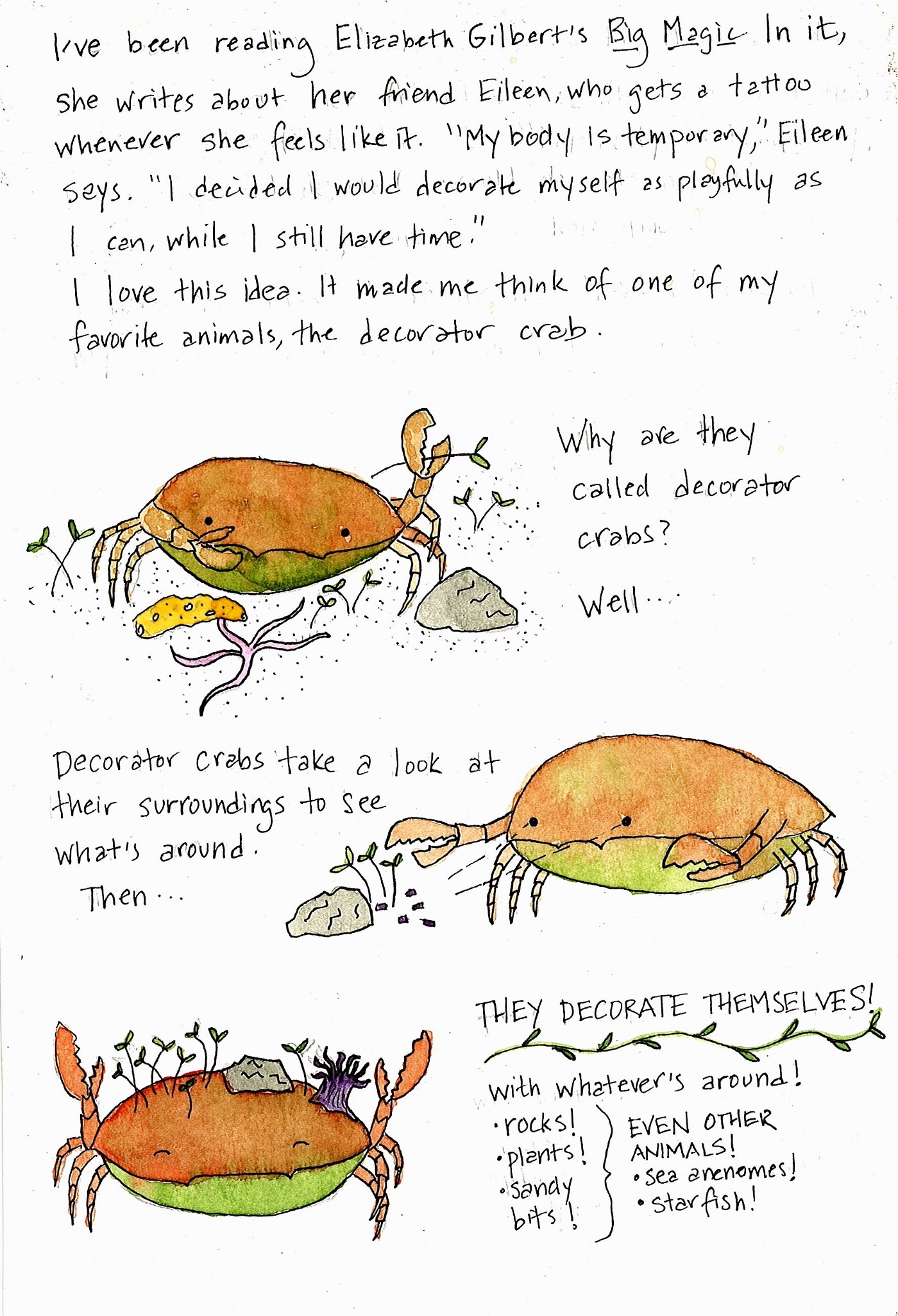 handwritten script with three watercolors of cartoon crabs. In the first, a crab sits on a sandy bottom with a sprig of something green in his claw. He is surrounded by a rock, a brittle star, a sponge, and some other green. The second crab sees a rock and some greens. The third has decorated himself with a rock, a sea anemone, and some green sprigs. Full text below images.