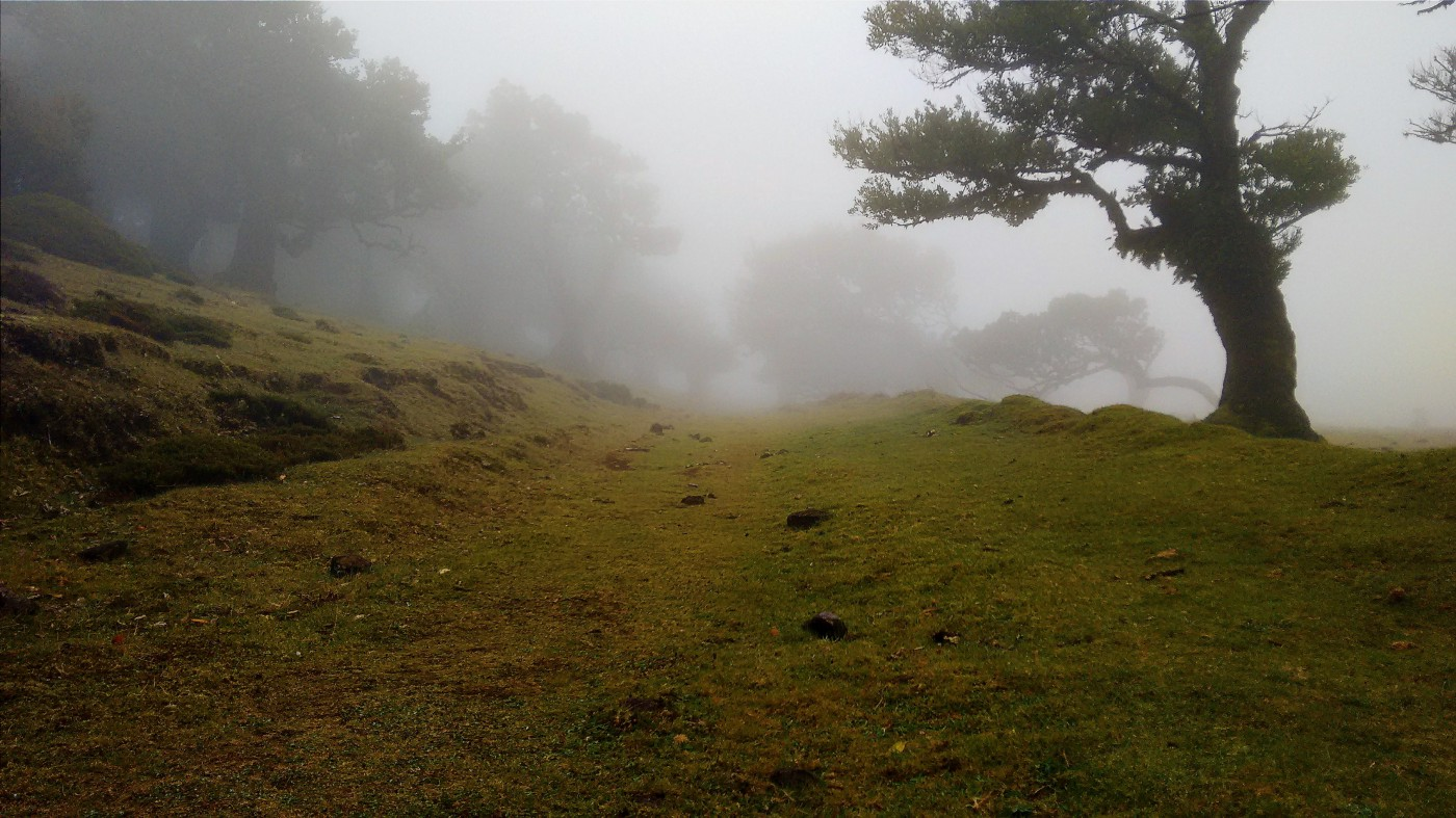 Low hill, trees, and fog.