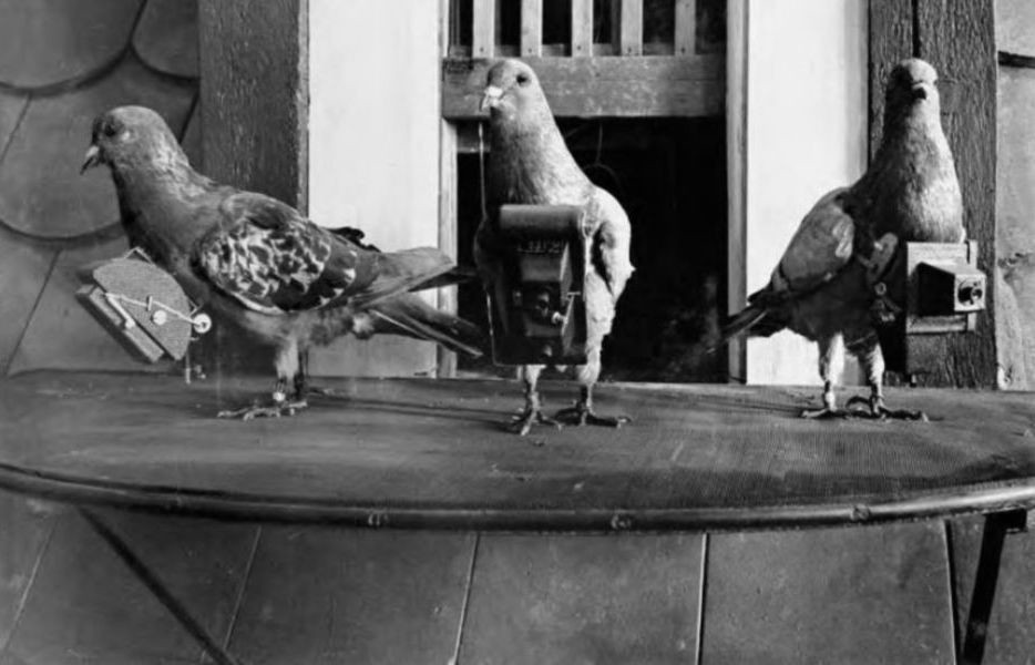 Three pigeons with doll-house sized cameras hanging from their necks.