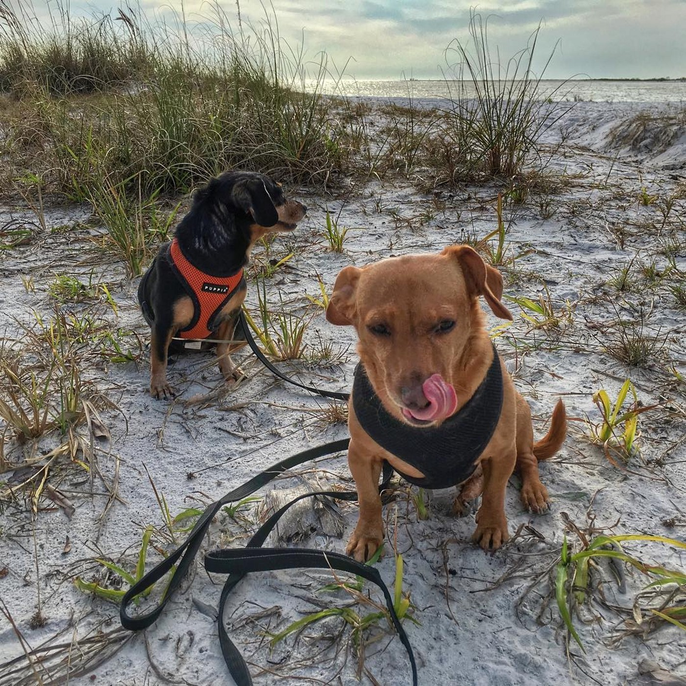 The well-named Dog Beach is located in Bonita Beach, near Fort Myers, FL.