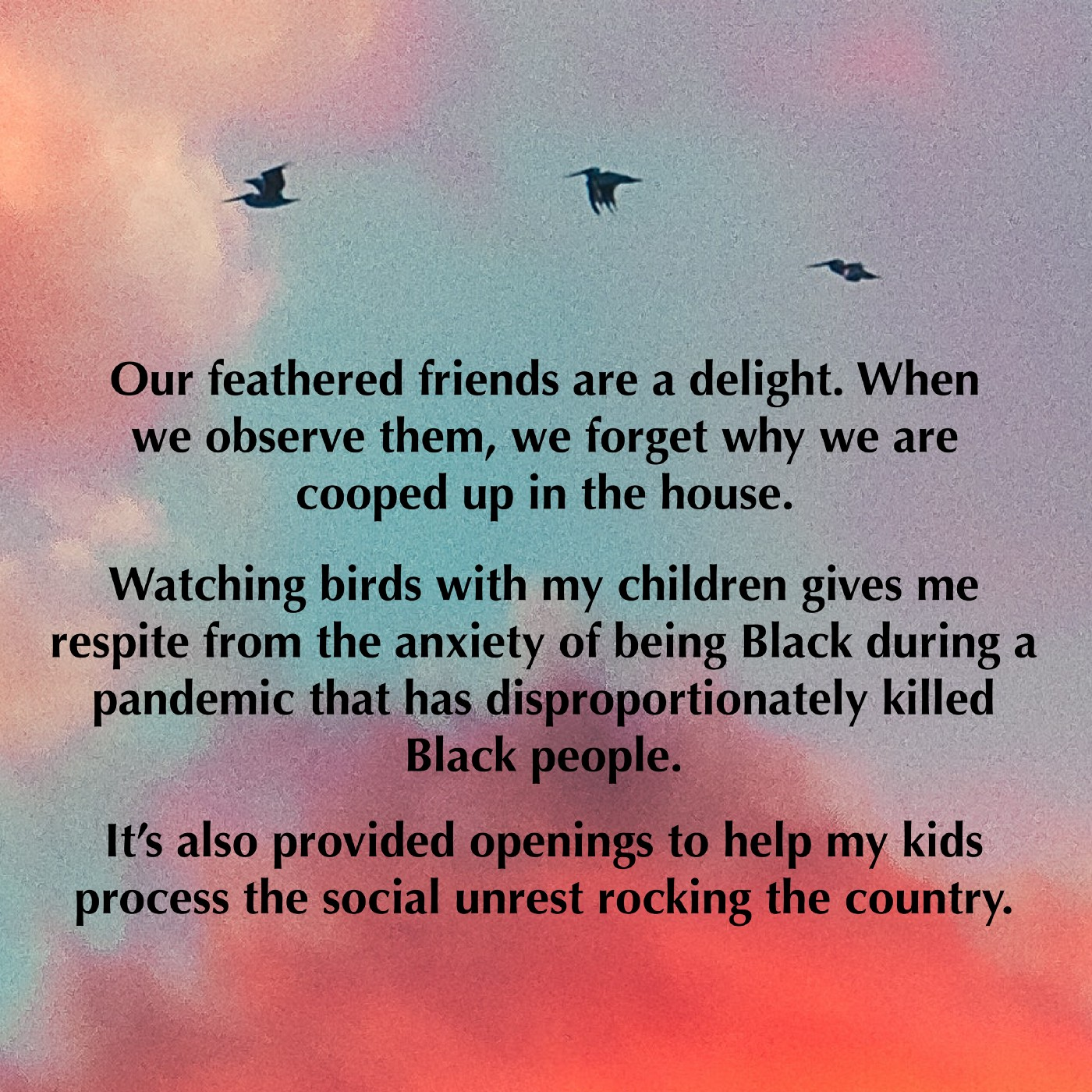 A quote from the linked story, about family  birding being a respite for a a Black family and a way to process current events