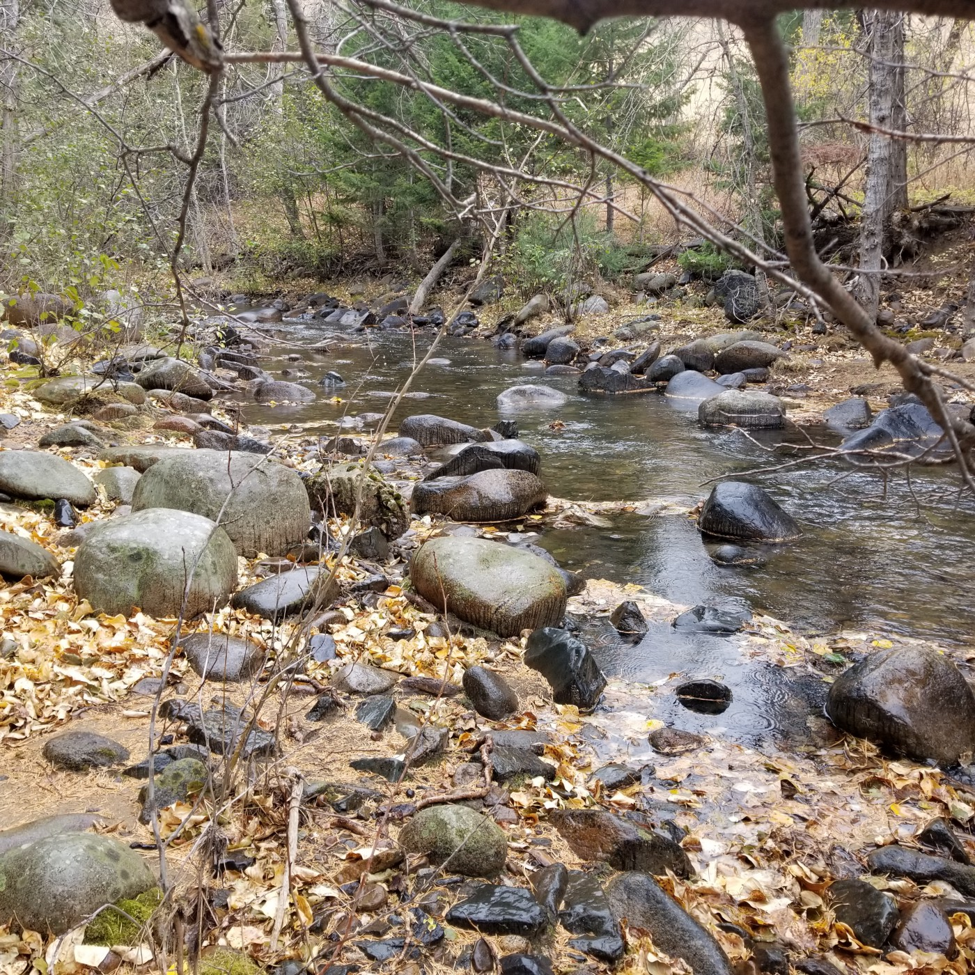 Picture of a Montana mountain creek in the fall