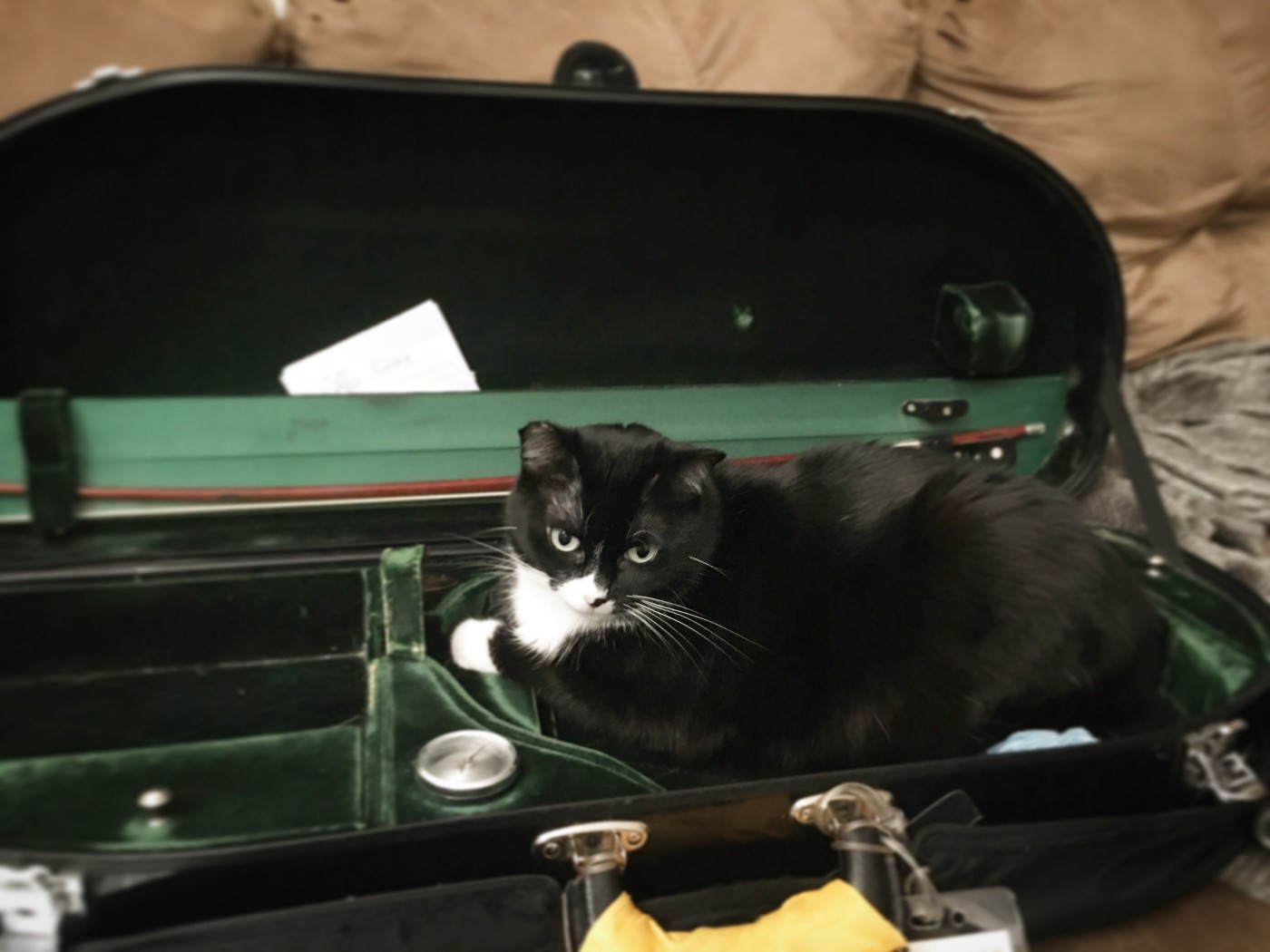 A tuxedo cat sitting in a string instrument case