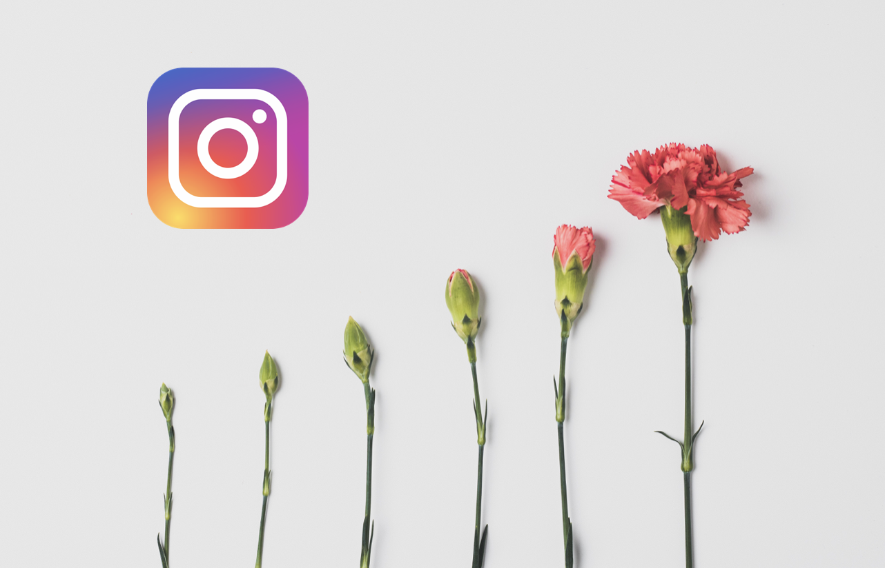 The Instagram logo next to flowers in different stages of growth.