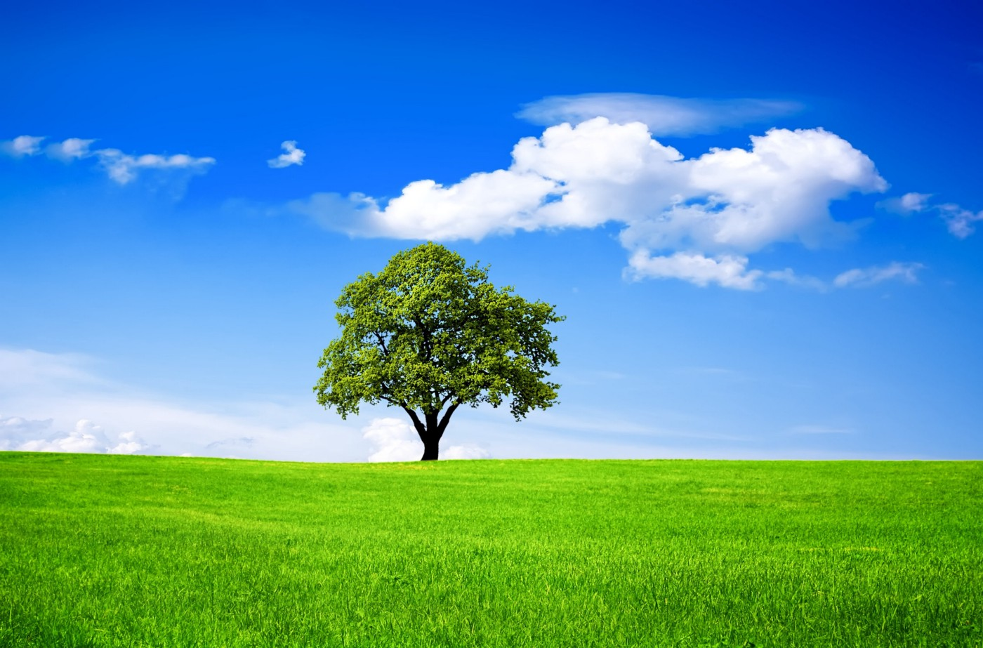 Wide open green field and blue sky with tree in the distance