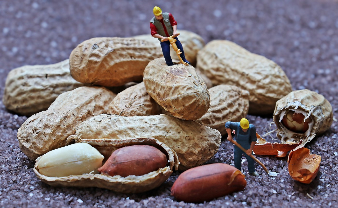 Will work for peanuts. Miniature figurines drilling peanuts in their shell. It's a metaphor for what Medium is asking its writers to do: Work for peanuts.