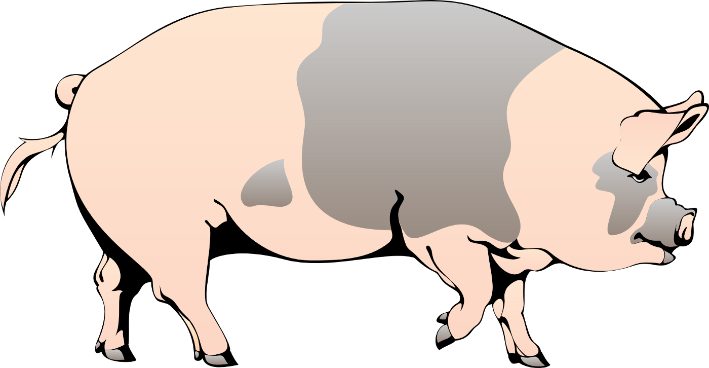 A vector of a pig, pink with spots.