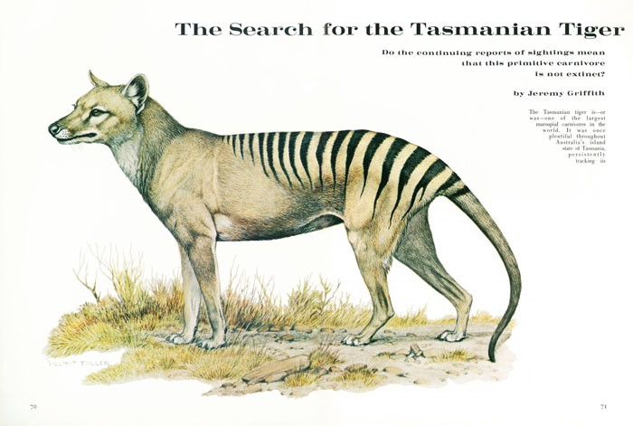 Jeremy Griffith's 1972 Natural History article about the Tasmanian Tiger