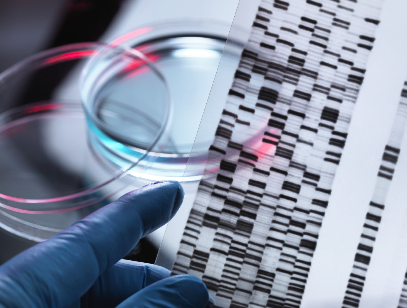 A close up of a gloved hand holding up a DNA autoradiogram next to a petri dish to illustrate genetic research.