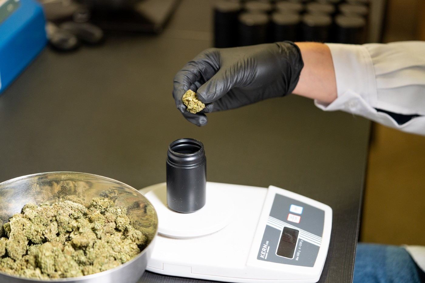 black gloved hand weighing cannabis on a digital scale